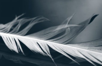 Feathers Wallpaper 22 1920x1200 340x220