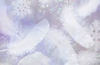 Feathers Wallpaper 29 1680x1050 340x220