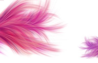 Feathers Wallpaper 31 1920x1024 340x220