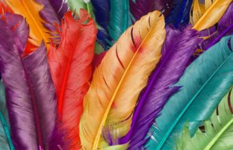 Feathers Wallpaper 38 1920x1200 340x220