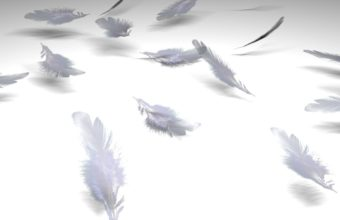 Feathers Wallpaper 45 1200x900 340x220