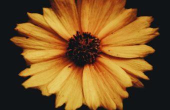 Flower Bud Petals Dark Background Wallpaper 1440x2560 340x220