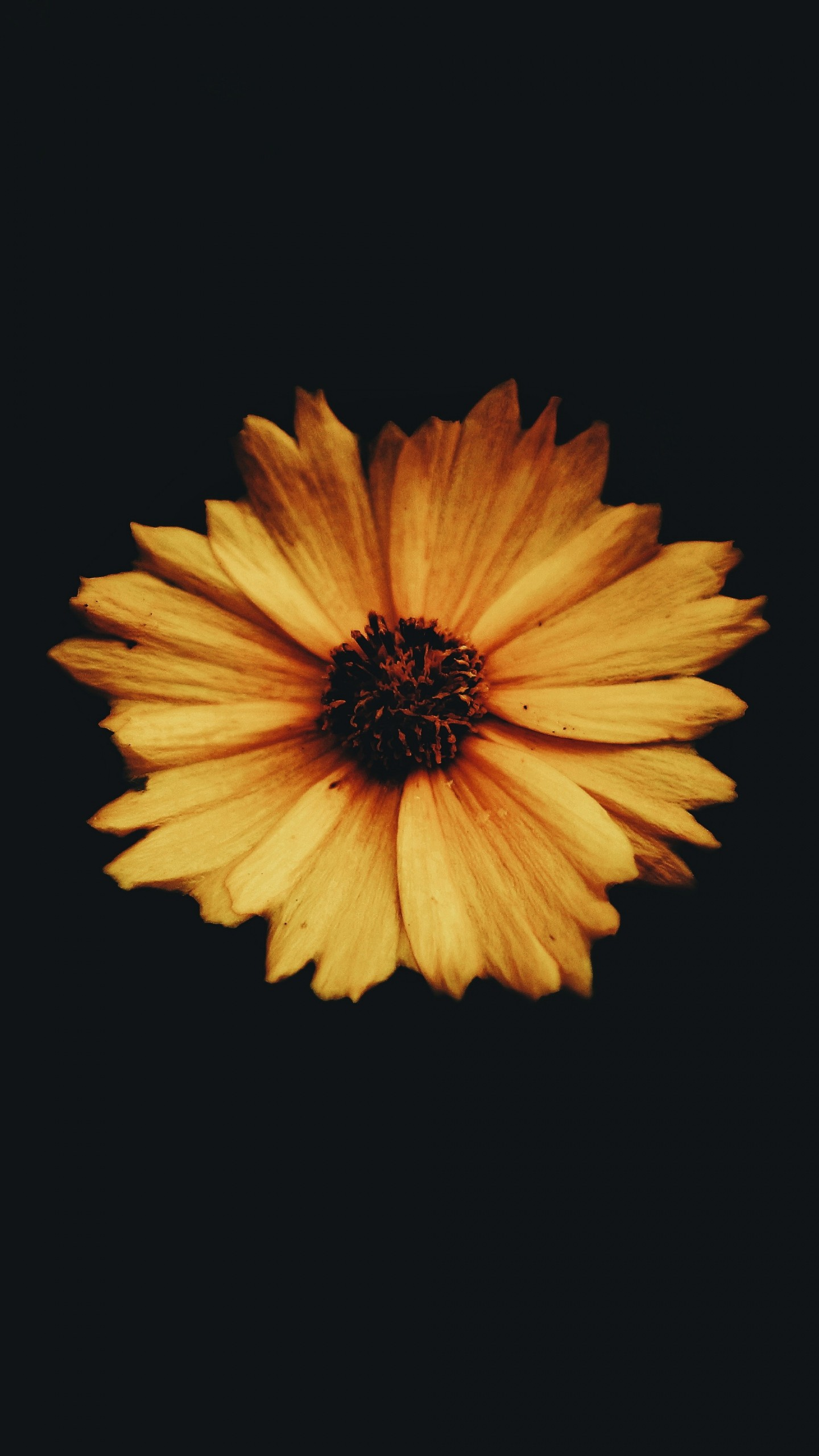 Flower Bud Petals Dark Background Wallpaper
