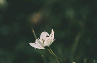 Flower Grass Blur Wallpaper 1440x2560 340x220