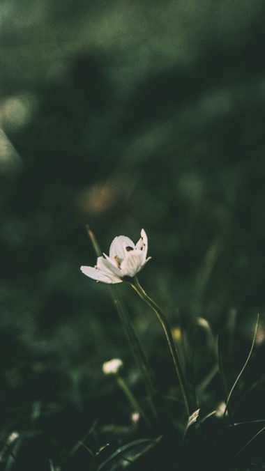 Flower Grass Blur Wallpaper 1440x2560 380x676