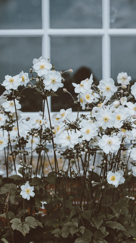 Flowers Window Flower Bed Wallpaper 1440x2560 768x1365