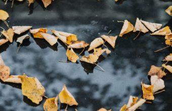 Foliage Autumn Heart Dry Fallen Wallpaper 1440x2560 340x220