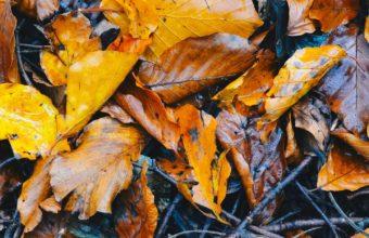 Foliage Fallen Autumn Wet Wallpaper 1440x2560 340x220