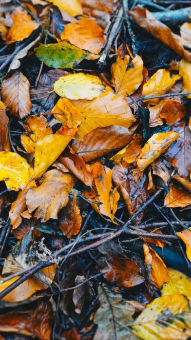 Foliage Fallen Autumn Wet Wallpaper 1440x2560 380x676