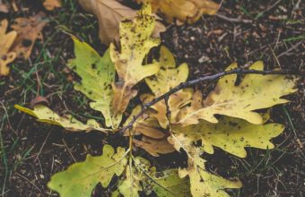 Foliage Oak Autumn Grass Wallpaper 1440x2560 340x220