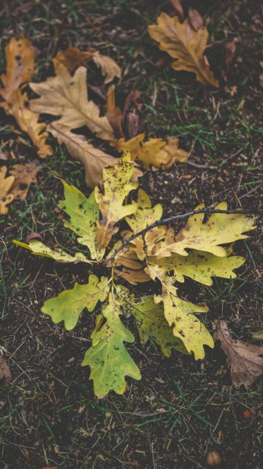 Foliage Oak Autumn Grass Wallpaper 1440x2560 380x676