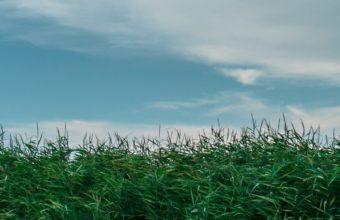 Grass Field Summer Sky Green Wallpaper 1440x2560 340x220