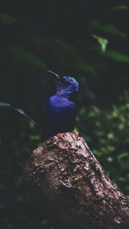 Kingfisher Bird Foliage Wallpaper 1440x2560 768x1365