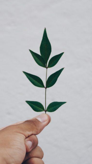 Leaf Hand Branch Wallpaper 1440x2560 380x676