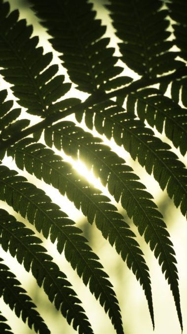 Leaf Light Shadow Wallpaper 1440x2560 380x676
