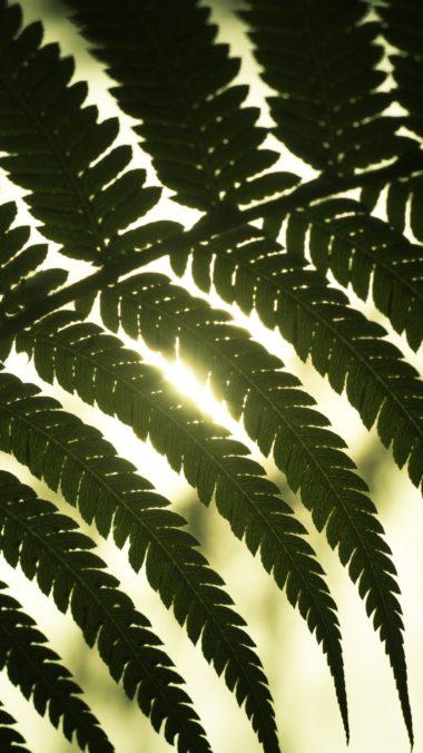 Leaf Light Shadow Wallpaper 1440x2560 380x676