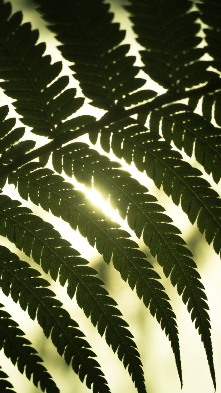Leaf Light Shadow Wallpaper 1440x2560 768x1365