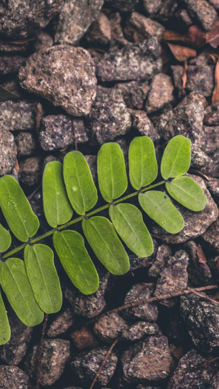 Leaf Stone Surface Wallpaper 1440x2560 768x1365
