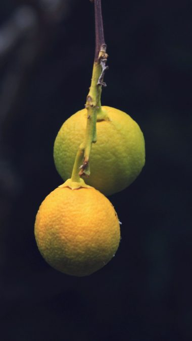 Lemons Citrus Branch Wallpaper 1440x2560 380x676