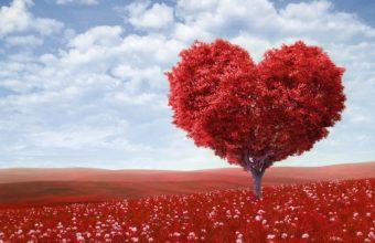 Love Heart Wallpaper 23 3840x2160 340x220