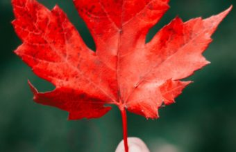 Maple Leaf Autumn Hand Wallpaper 1440x2560 340x220