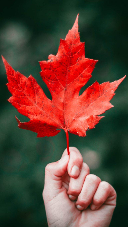 Maple Leaf Autumn Hand Wallpaper 1440x2560 768x1365