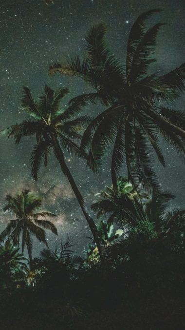 Palms Trees Starry Sky Wallpaper 1440x2560 380x676
