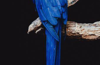 Parrot Bird Branch Wallpaper 1440x2560 340x220