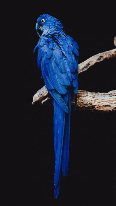 Parrot Bird Branch Wallpaper 1440x2560 380x676