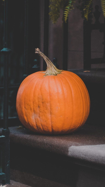Pumpkin Autumn Harvest Wallpaper 1440x2560 768x1365