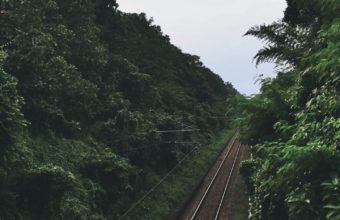 Railway Trees Road Wallpaper 1440x2560 340x220