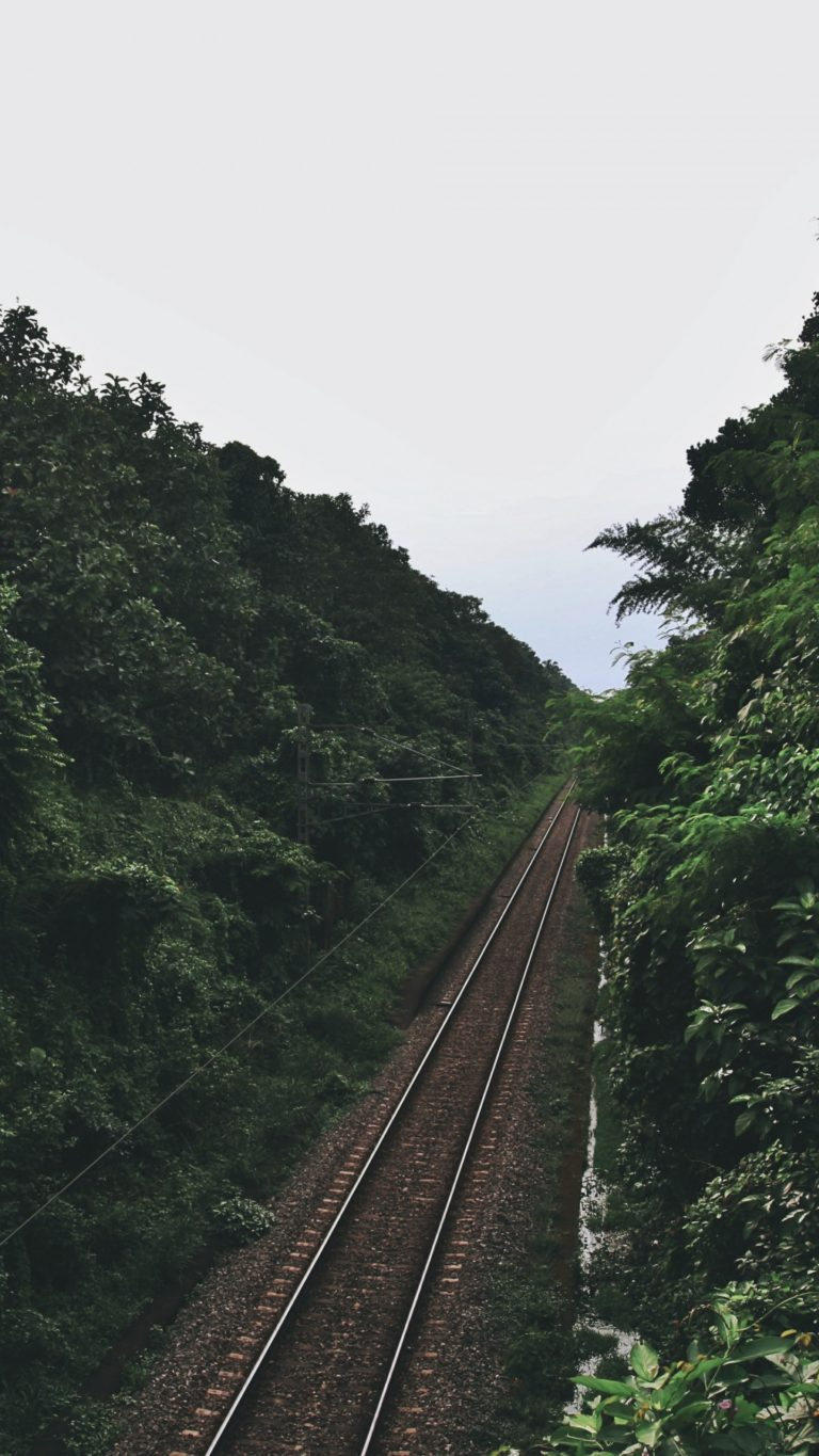 Railway Trees Road Wallpaper 1440x2560 768x1365