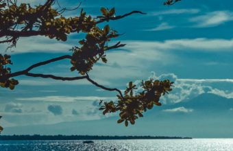 River Shore Trees Sunlight Wallpaper 1440x2560 340x220