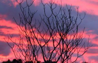 Tree Sunset Night Wallpaper 1440x2560 340x220