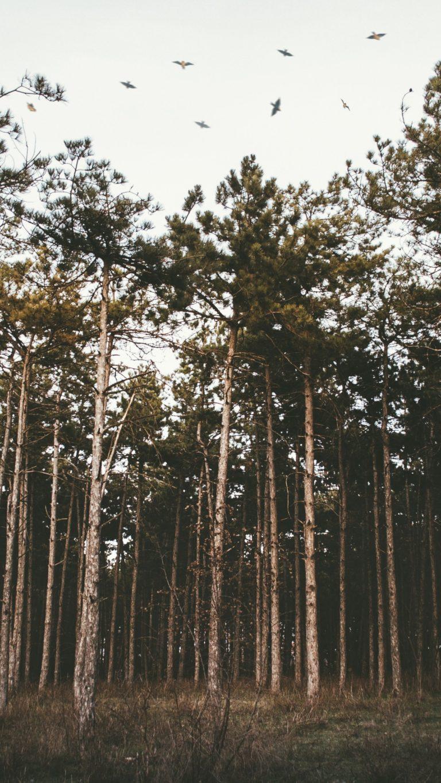 Trees Forest Grass Evening Wallpaper 1440x2560 768x1365