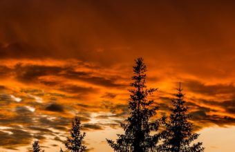 Trees Sunset Sky Wallpaper 1440x2560 340x220