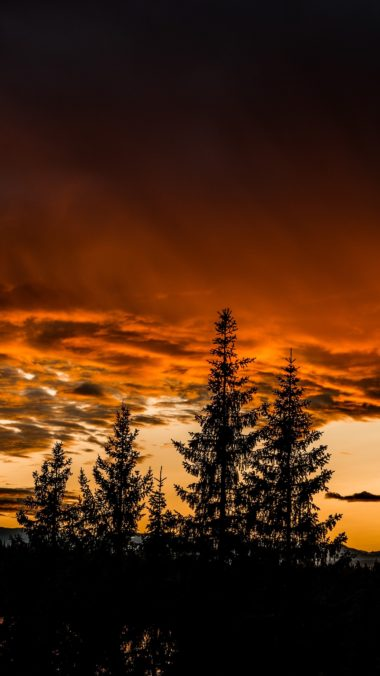 Trees Sunset Sky Wallpaper 1440x2560 380x676