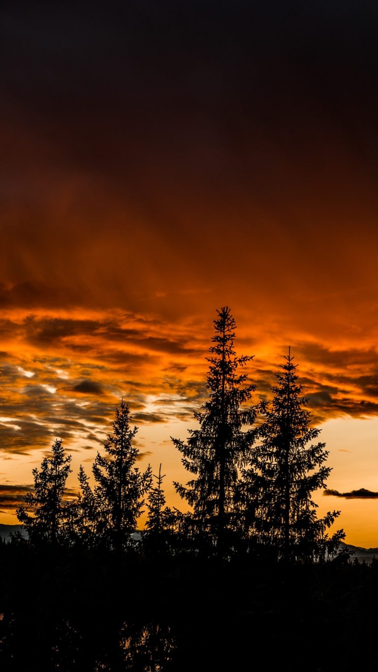 Trees Sunset Sky Wallpaper 1440x2560 768x1365