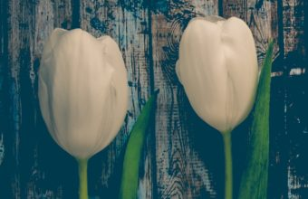 Tulips Flowers Stem Wallpaper 1440x2560 340x220