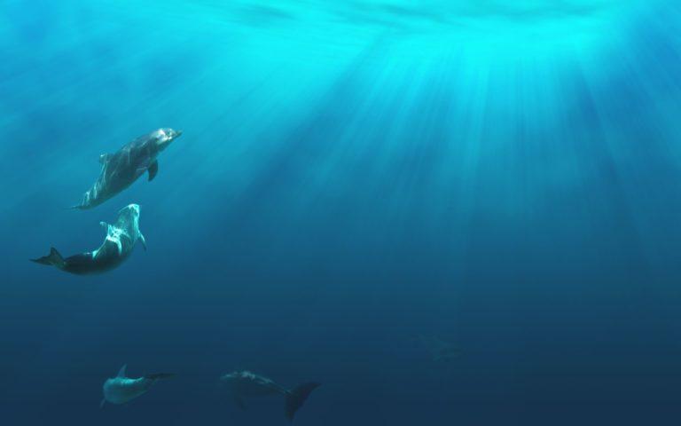Under Water Wallpaper 03 1920x1200 768x480
