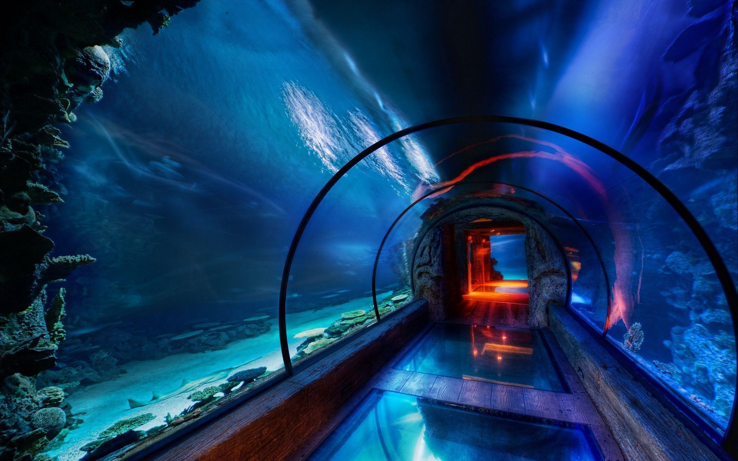 under water wallpaper 09 2560x1600