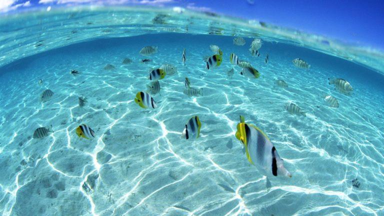 Under Water Wallpaper 18 1920x1080 768x432
