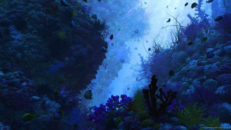 Under Water Wallpaper 19 1920x1080 768x432