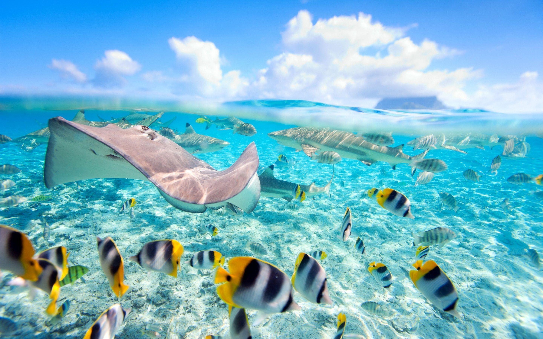 Under Water Wallpaper 23 2880x1800 768x480