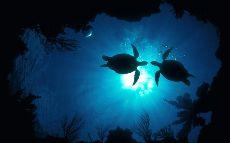 Under Water Wallpaper 26 1440x900 768x480