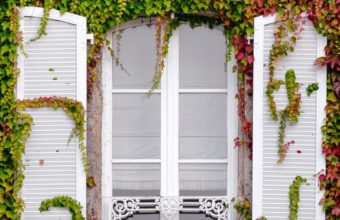 Window Foliage Facade Wallpaper 1440x2560 340x220