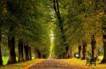 Autumn Trees Hdr Park Leaves Walk Road Colors Wallpaper 1600x1280 340x220