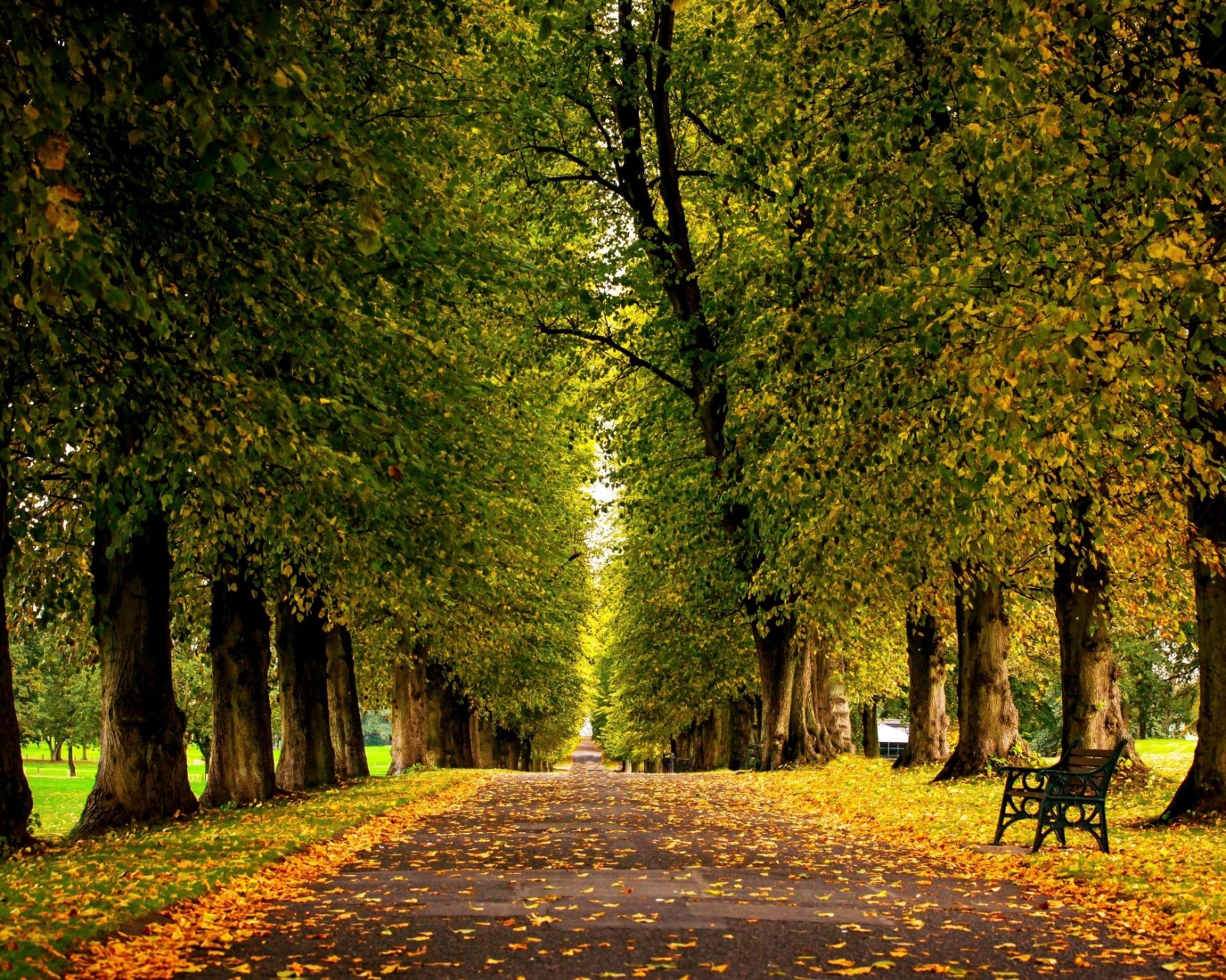 autumn trees hdr park leaves walk road colors wallpaper - [1600x1280]