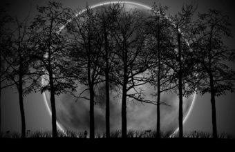 Black Moon Wallpaper 15 2560x1600 340x220