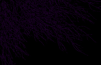 Black Purple Wallpaper 24 1599x1241 340x220